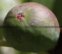 Photo macro fruit