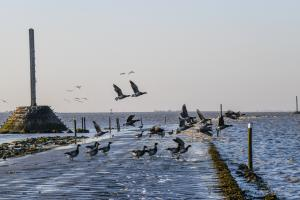 Photo d'oiseau en vol sur le Passage du Gois