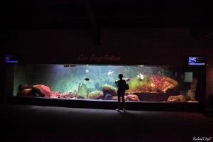 Photo d'un aquarium géant