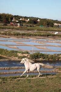 Photo cheval courant dans les marais salants Noirmoutier