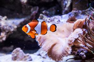 Photo poisson clown