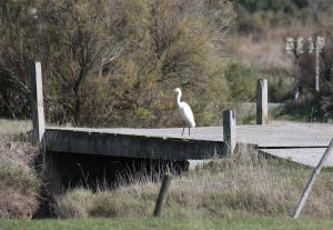 Photo aigrette sur passerelle