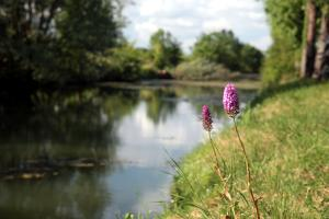 photo orchidee dans le marais poitevin