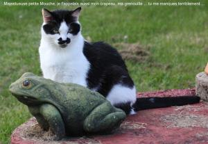Ma mouche ou le crapaud photo de chat