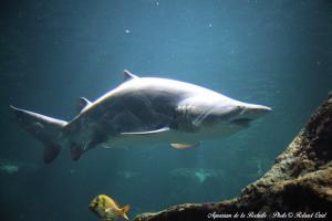 Photo requin Aquarium la Rochelle