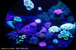 Photo univers déco Aquarium la Rochelle