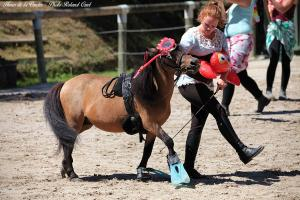 Photo poney cachou haras de la vendee