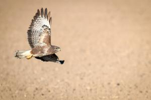Photo buse variable en vol