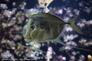 Photo poisson exotique Aquarium de la Rochelle