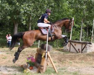Photo cheval concours