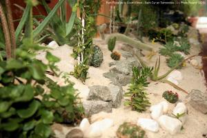 Photo de plantes sous serre court d aron