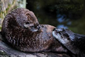 Photo loutre zoo de mervent Natur'Zoo