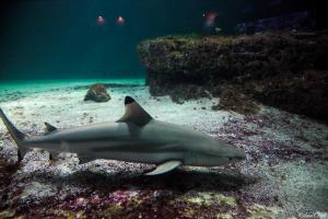 Photo de requin en aquarium
