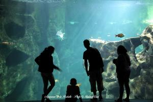 Photo personnes devant un aquarium