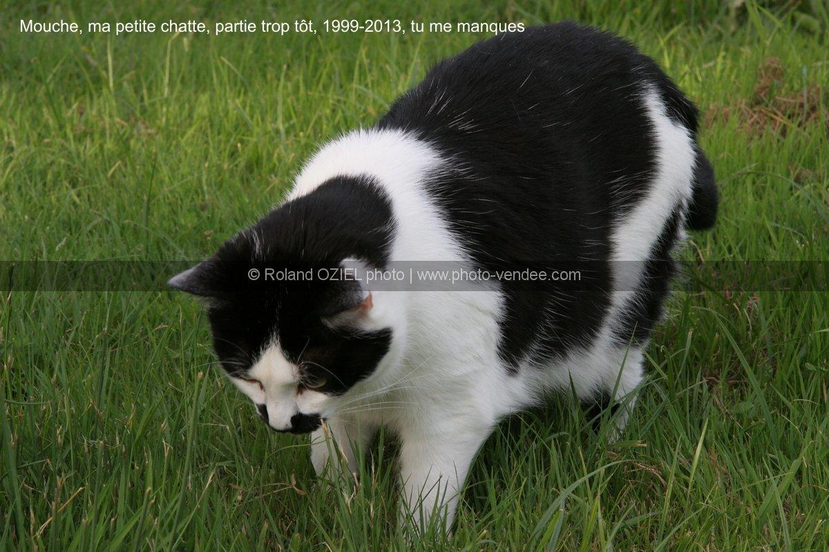 chat en train de chasser les souris photo vend e. Black Bedroom Furniture Sets. Home Design Ideas