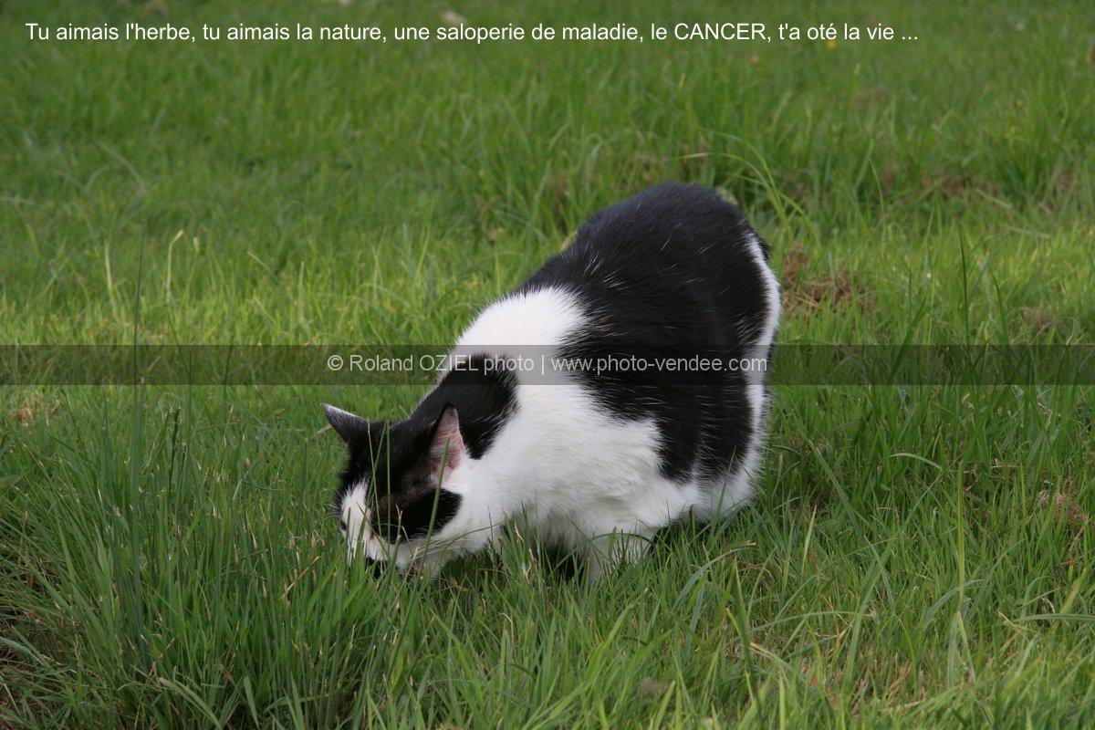 chat mangeant de l 39 herbe se purgeant photo vend e. Black Bedroom Furniture Sets. Home Design Ideas