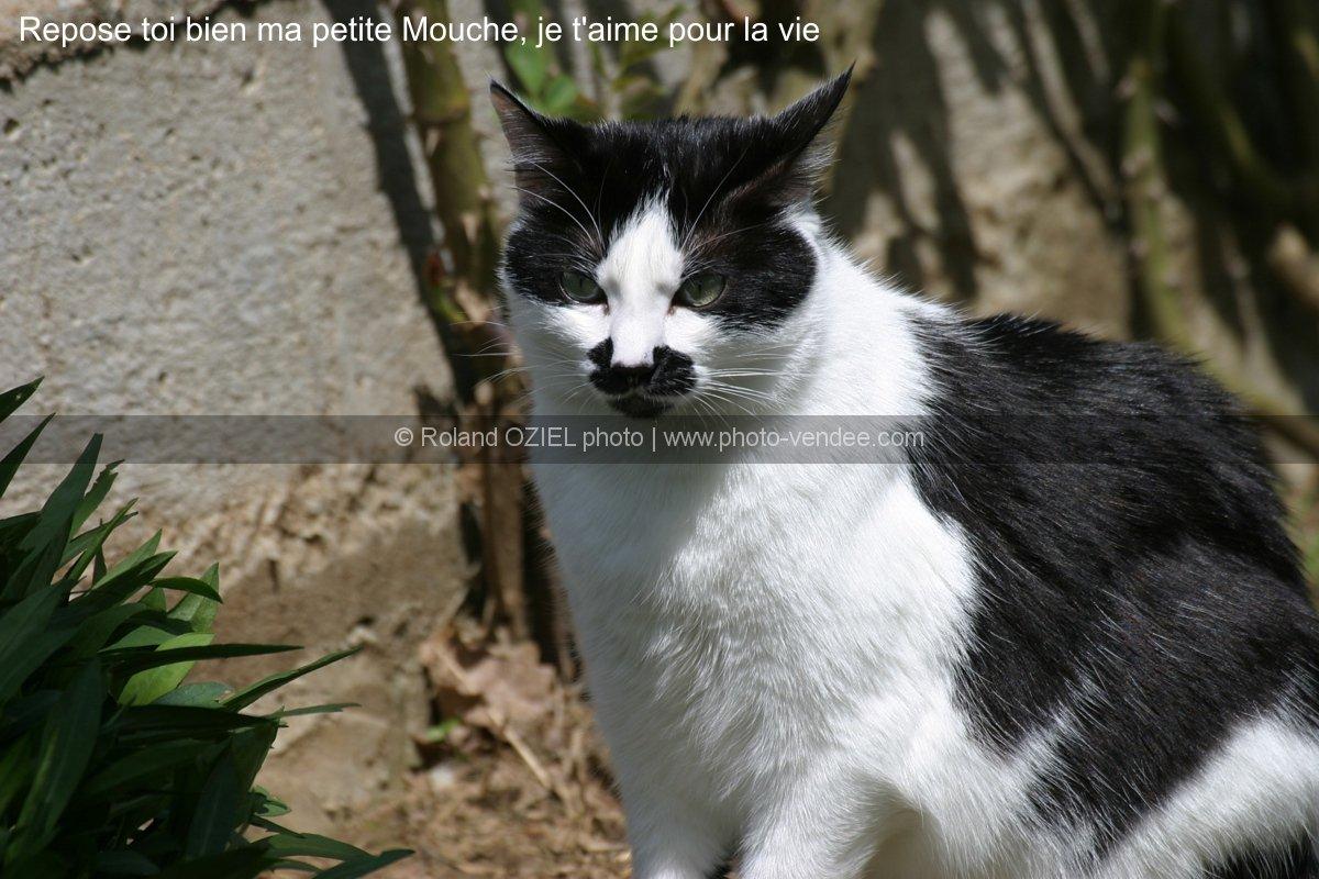 Un Blanc dfonce la chatte d'une Noire - Pornodinguecom