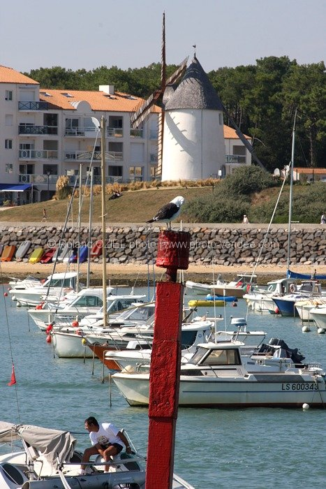 Photo mouette sur le port