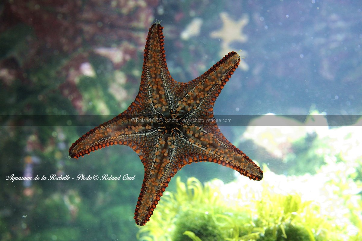 photo 233 toile de mer aquarium la rochelle photo vend 233 e