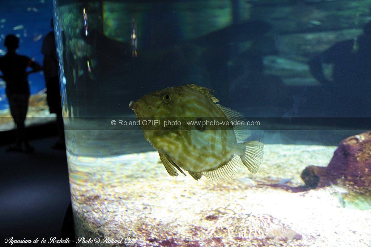 Photo poisson gros plan aquarium la rochelle photo vend e for Gros poisson aquarium