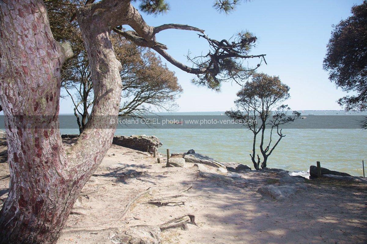 Photo vue mer avec tronc pin maritime noirmoutier photo for Camping ile noirmoutier avec piscine