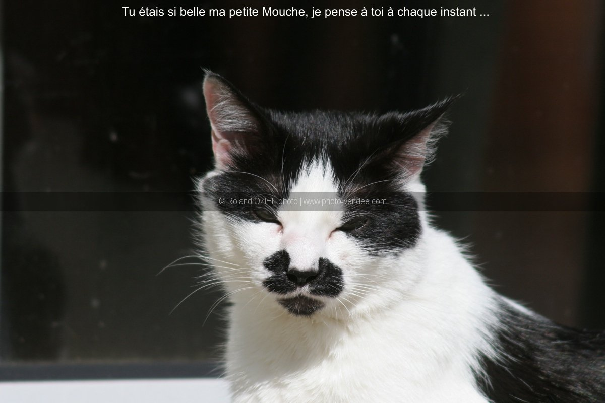 Noir beauté chatte pics