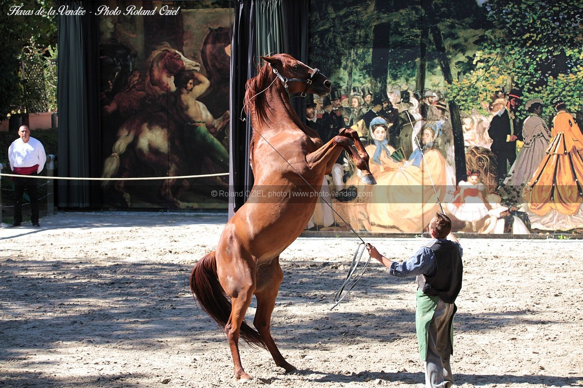 Photo spectacles equestres haras de la vendee la roche sur yon