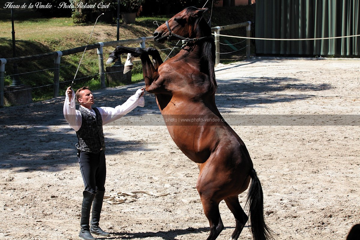 Photo cheval dresse debout haras de la vendee